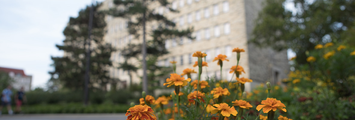 Marigolds in bloom in front of Fraser Hall